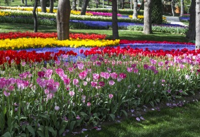 Приказен Фестивал на лалето в Истанбул през пролетта! 2 нощувки със закуски, транспорт и посещение на Одрин - Снимка