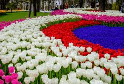 Фестивал на лалето през март или април в Истанбул! 2 нощувки със закуски в Courtyard By Marriott Istanbul International Airport 4*, транспорт от Русе, В. Търново и Казанлък - Снимка