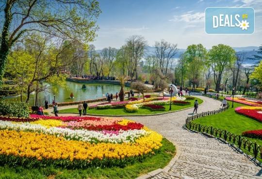Фестивал на лалето през март или април в Истанбул! 2 нощувки със закуски в Golden Tulip Istanbul Bayrampasa 5*, транспорт и посещение на мол Forum - Снимка 1