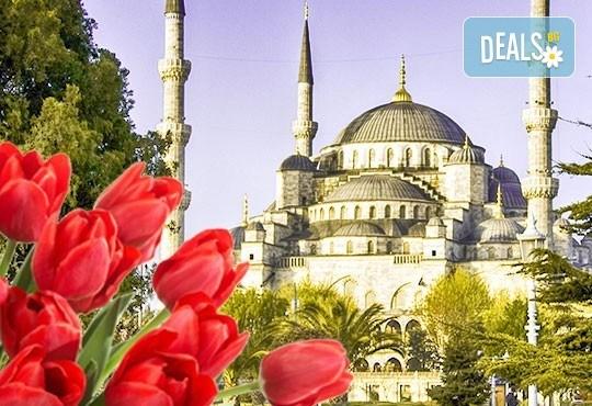 Фестивал на лалето в Истанбул: 2 нощувки със закуски в х-л 5*, транспорт от Варна