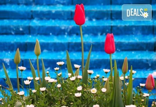 Супер цена за Фестивал на лалето през пролетта в Истанбул! 2 нощувки със закуски в Grand Milan 3 *, транспорт и посещение на Одрин - Снимка 1