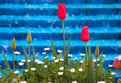 Супер цена за Фестивал на лалето през пролетта в Истанбул! 2 нощувки със закуски в Grand Milan 3 *, транспорт и посещение на Одрин - Снимка