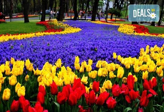 Фестивал на лалето в Истанбул през април: 2 нощувки и закуски в хотел 5*, транспорт
