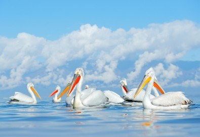 Уикенд екскурзия до Кавала с Дари Травел! 1 нощувка и закуска в хотел 3*, транспорт и възможност за разходка с лодка в езерото Керкини - Снимка