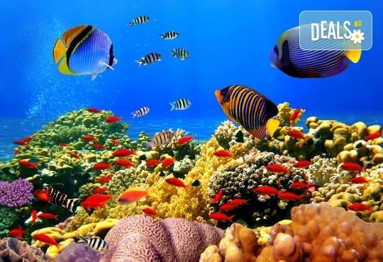 Гореща оферта за Египет от Караджъ Турс! 7 нощувки на база All Inclusive в Hawaii le Jardin Aqua Park 5*, Хургада, самолетен билет с директен чартърен полет и трансфери - Снимка 6