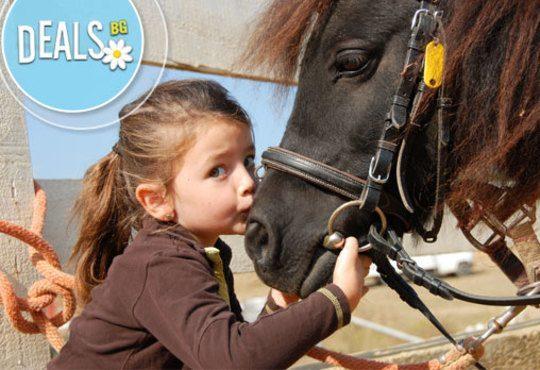 Обичате ли конете? 4 дни обучение по конна езда, общо 210 мин. и преход по избор от конна база Драгалевци - Снимка 5