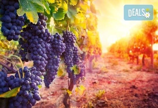 Екскурзия за един ден до Стария Пловдив за Дефилето на Младото вино от туристическа агенция По света и у нас - Снимка 1