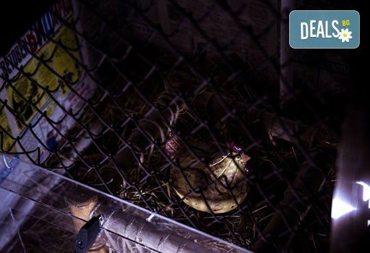 Подарете на детето си незабравимо приключение! Детски рожден ден за до 20 деца с Еscape игра на живо от Emergency escape! - Снимка 13