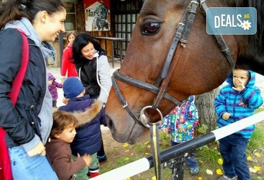45-минутен урок по конна езда за начинаещи или за напреднали на манеж от Езда София в конна база Хан Аспарух! - Снимка 5