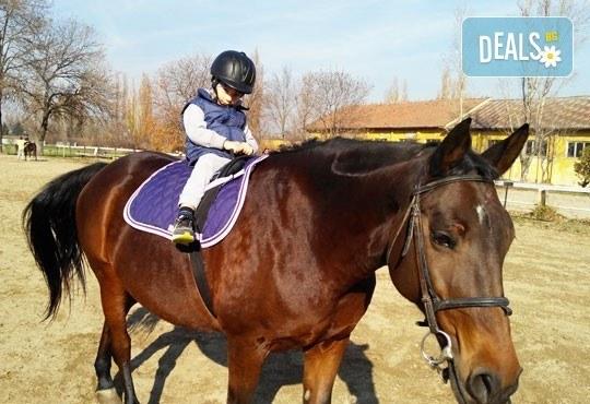 45-минутен урок по конна езда за начинаещи или за напреднали на манеж от Езда София в конна база Хан Аспарух! - Снимка 6