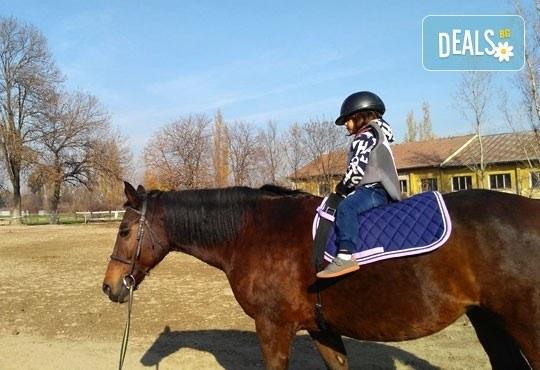 45-минутен урок по конна езда за начинаещи или за напреднали на манеж от Езда София в конна база Хан Аспарух! - Снимка 7