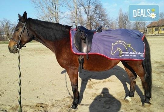 45-минутен урок по конна езда за начинаещи или за напреднали на манеж от Езда София в конна база Хан Аспарух! - Снимка 8