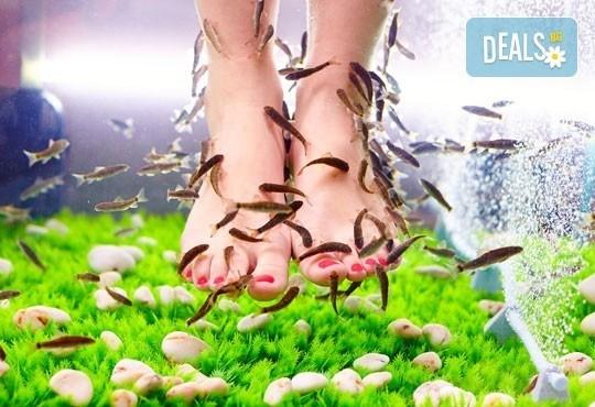 Поглезете се с 15 или 30-минутна СПА терапия за ходила с рибки Garra Rufa от Royal Beauty Center! - Снимка 1