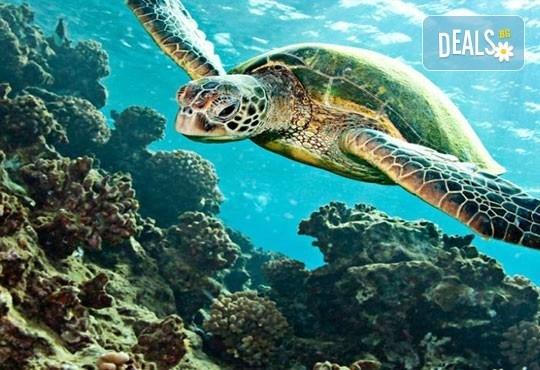 През юни на о. Закинтос - перлата на Йонийско море! 3 нощувки със закуски, транспорт, фериботни билети и програма! - Снимка 2