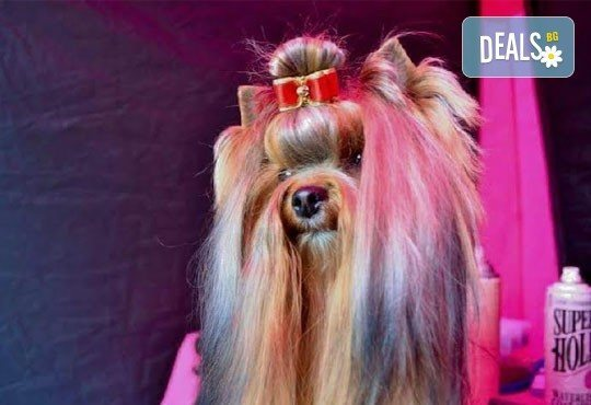 Спа пакети за Вашия домашен любимец! Къпане, оформяне или пълна пролетна промяна на кученца от дребни породи в Serdika Groom by P&T! - Снимка 2