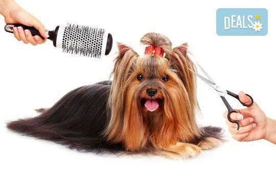 Спа пакети за Вашия домашен любимец! Къпане, оформяне или пълна пролетна промяна на кученца от дребни породи в Serdika Groom by P&T! - Снимка 1