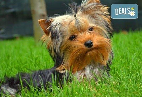 Спа пакети за Вашия домашен любимец! Къпане, оформяне или пълна пролетна промяна на кученца от дребни породи в Serdika Groom by P&T! - Снимка 3