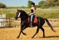 45 минути конна езда с водач или урок с инструктор от София Юг, Драгалевци