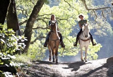 Обичате ли конете? 60-минутна конна езда с водач или 60-минутен урок по конна езда с инструктор от конна база София – Юг, кв. Драгалевци!