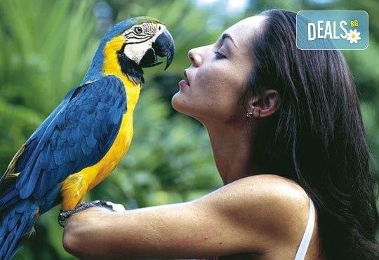 Почивка в Домениканска Република! 7 нощувки на база All Inclusive в Natura Park 5*, Пунта Кана, самолетен билет, трансфери и летищни такси! - Снимка 4