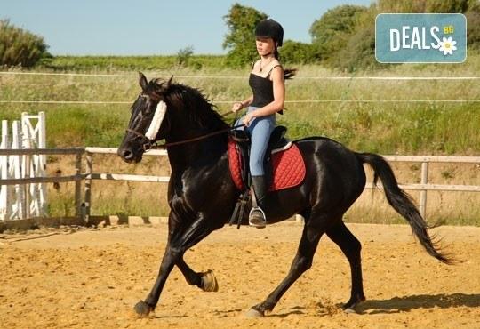 Обичате ли конете? 4 дни обучение по конна езда, общо 210 минути, и преход по избор от конна база София – Юг, кв. Драгалевци! - Снимка 1