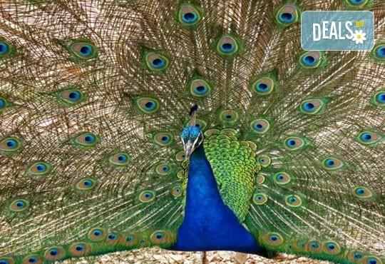 Екскурзия през септември до Дубровник с Дари Травел! 3 нощувки, закуски и вечери в хотел 3*, транспорт и програма в Будва и Котор! - Снимка 5