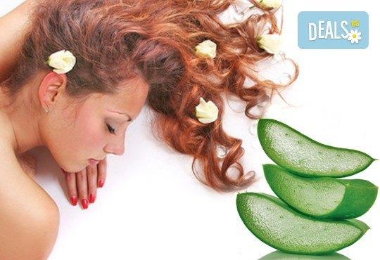 Болкоуспокояващ масаж на цяло тяло с масло алое, чаено дърво или иланг иланг в Wave Studio - НДК - Снимка 1