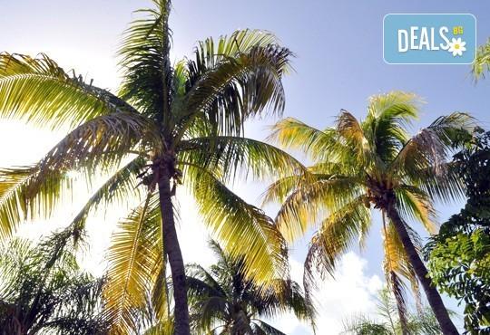 Почивка в Доминиканска Република! 7 нощувки на база All Inclusive, хотел и период по избор в Пунта Кана, самолетен билет, трансфери и летищни такси! - Снимка 9