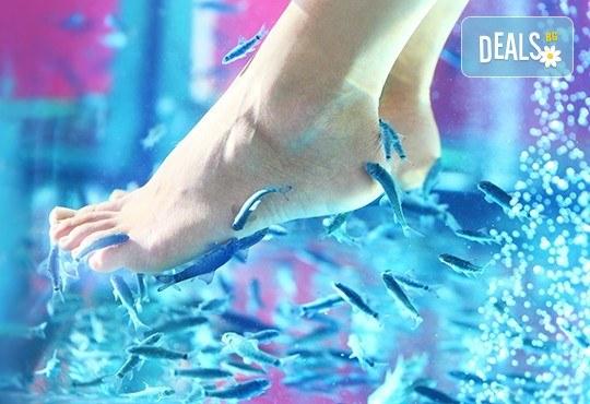 Поглезете се с 15 или 30-минутна СПА терапия за ходила с рибки Garra Rufa от LMF SPA FISH STUDIO! - Снимка 1