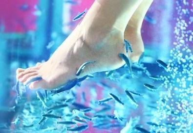 Поглезете се с 15 или 30-минутна СПА терапия за ходила с рибки Garra Rufa от LMF SPA FISH STUDIO! - Снимка