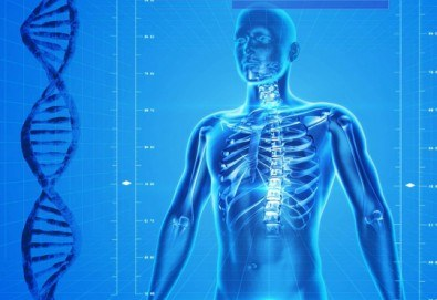 Измерване на костната плътност с ултразвуков остеоденситометър и незабавно получаване на резултата от изследването от Медицински център Хармония - Снимка