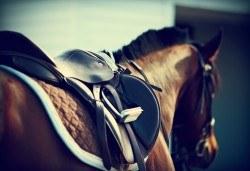 60 минути конна езда с водач и бонус стрелба с лък от конна база София – Юг, Драгалевци! - Снимка