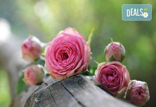 Заповядайте на ежегодния Празник на розата в Казанлък - еднодневна екскурзия с транспорт от Русе и екскурзовод - Снимка 1