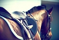Незабравимо приключение, изпълнено с много емоции! Подарете двучасов конен поход от конна база София – Юг, кв. Драгалевци! - Снимка