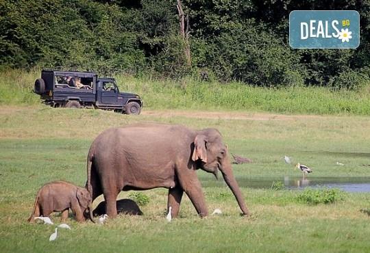 Екзотична Шри Ланка през 2018! Екскурзия със 7 нощувки, закуски и вечери, самолетен билет, трансфери, посещение на Кралската ботаническа градина, Храма на зъба, резерват за слонове и водопадите Клеър! - Снимка 9