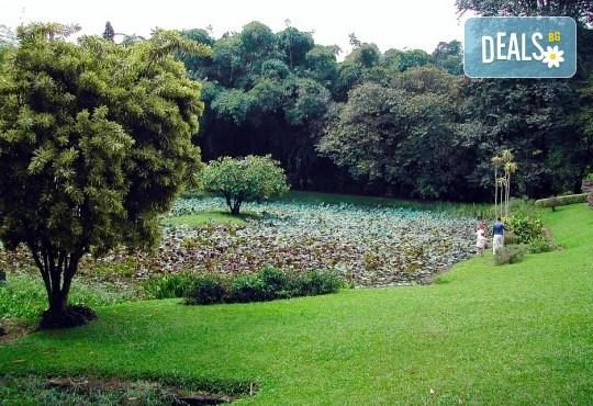 Екзотична Шри Ланка през 2018! Екскурзия със 7 нощувки, закуски и вечери, самолетен билет, трансфери, посещение на Кралската ботаническа градина, Храма на зъба, резерват за слонове и водопадите Клеър! - Снимка 7