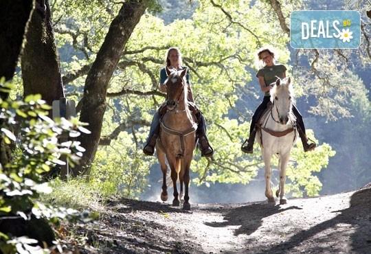 """Обичате ли конете? 4 дни обучение по конна езда, общо 210 минути и преход по избор от конна база """"София – Юг"""" - Снимка 1"""