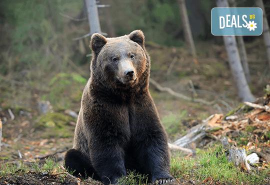 Екскурзия на 24.05. до парка за танцуващи мечки над Белица с агенция Поход! Транспорт и програма в с. Добърско - Снимка 1