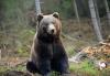 Екскурзия на 24.05. до парка за танцуващи мечки над Белица с агенция Поход! Транспорт и програма в с. Добърско - thumb 1