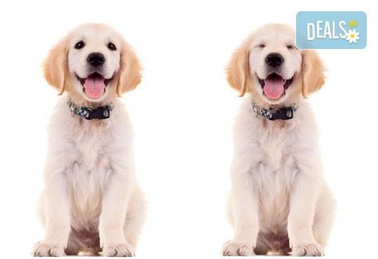 СПА пакет за Вашия домашен любимец от Art Grooming Studio Bumbachka - къпане, подстригване или цялостна промяна на кученца! - Снимка 2