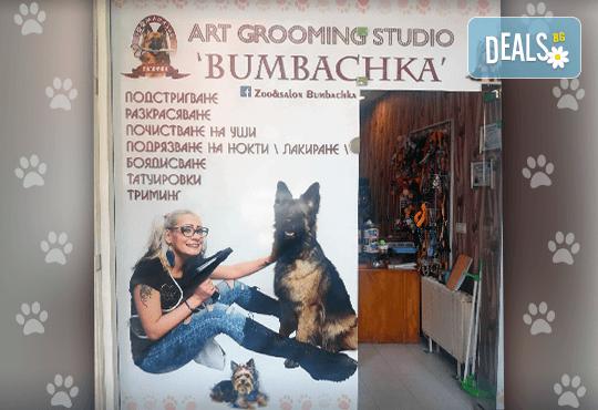 СПА пакет за Вашия домашен любимец от Art Grooming Studio Bumbachka - къпане, подстригване или цялостна промяна на кученца! - Снимка 1