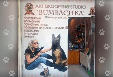 СПА пакет за Вашия домашен любимец от Art Grooming Studio Bumbachka - къпане, подстригване или цялостна промяна на кученца! - Снимка