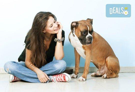 СПА пакет за Вашия домашен любимец от Art Grooming Studio Bumbachka - къпане, подстригване или цялостна промяна на кученца! - Снимка 3