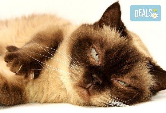 Къпане с испанска козметика Artero, подстригване и оформяне на нокти на котки от професионален груумър в Art Grooming Studio Bumbachka! - Снимка 1