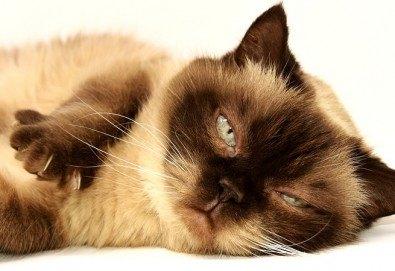 Къпане с испанска козметика Artero, подстригване и оформяне на нокти на котки от професионален груумър в Art Grooming Studio Bumbachka! - Снимка