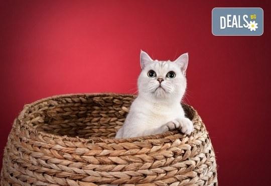Къпане с испанска козметика Artero, подстригване и оформяне на нокти на котки от професионален груумър в Art Grooming Studio Bumbachka! - Снимка 2