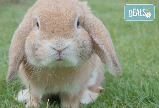 Къпане с испанска козметика Artero, подстригване и оформяне на нокти на зайци от професионален груумър в Art Grooming Studio Bumbachka! - Снимка 2