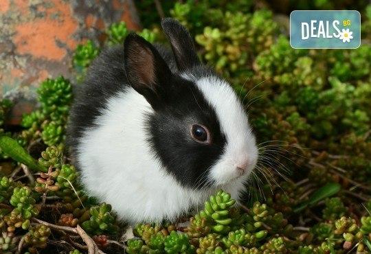 Къпане с испанска козметика Artero, подстригване и оформяне на нокти на зайци от професионален груумър в Art Grooming Studio Bumbachka! - Снимка 1