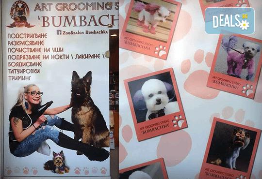 Къпане с испанска козметика Artero, подстригване и оформяне на нокти на зайци от професионален груумър в Art Grooming Studio Bumbachka! - Снимка 7
