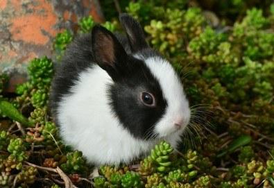 Къпане с испанска козметика Artero, подстригване и оформяне на нокти на зайци от професионален груумър в Art Grooming Studio Bumbachka! - Снимка